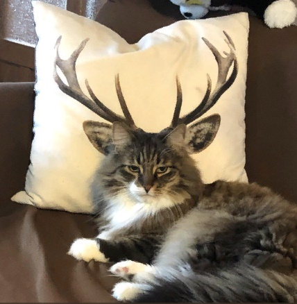 Horned cat photo