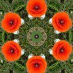 Anatoly Vostochny Flower art kaleidoscope