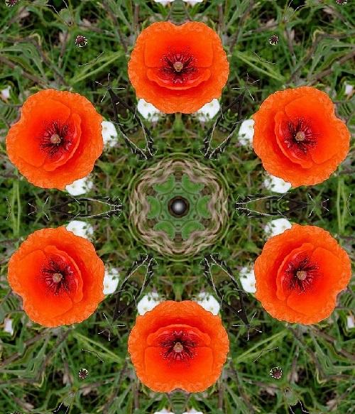 Flower kaleidoscope by photographer Anatoly Vostochny